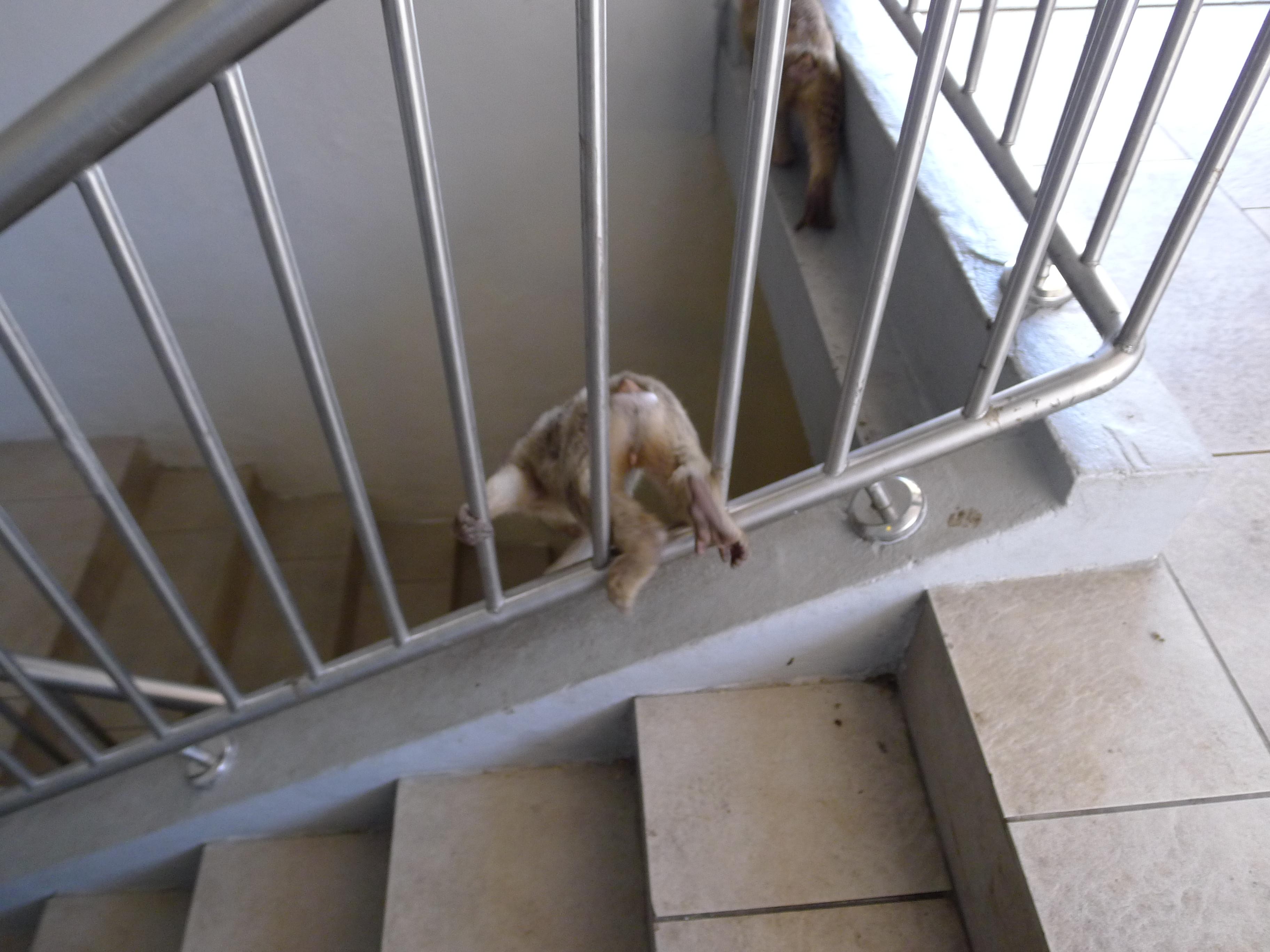 monkeys in the stairwell