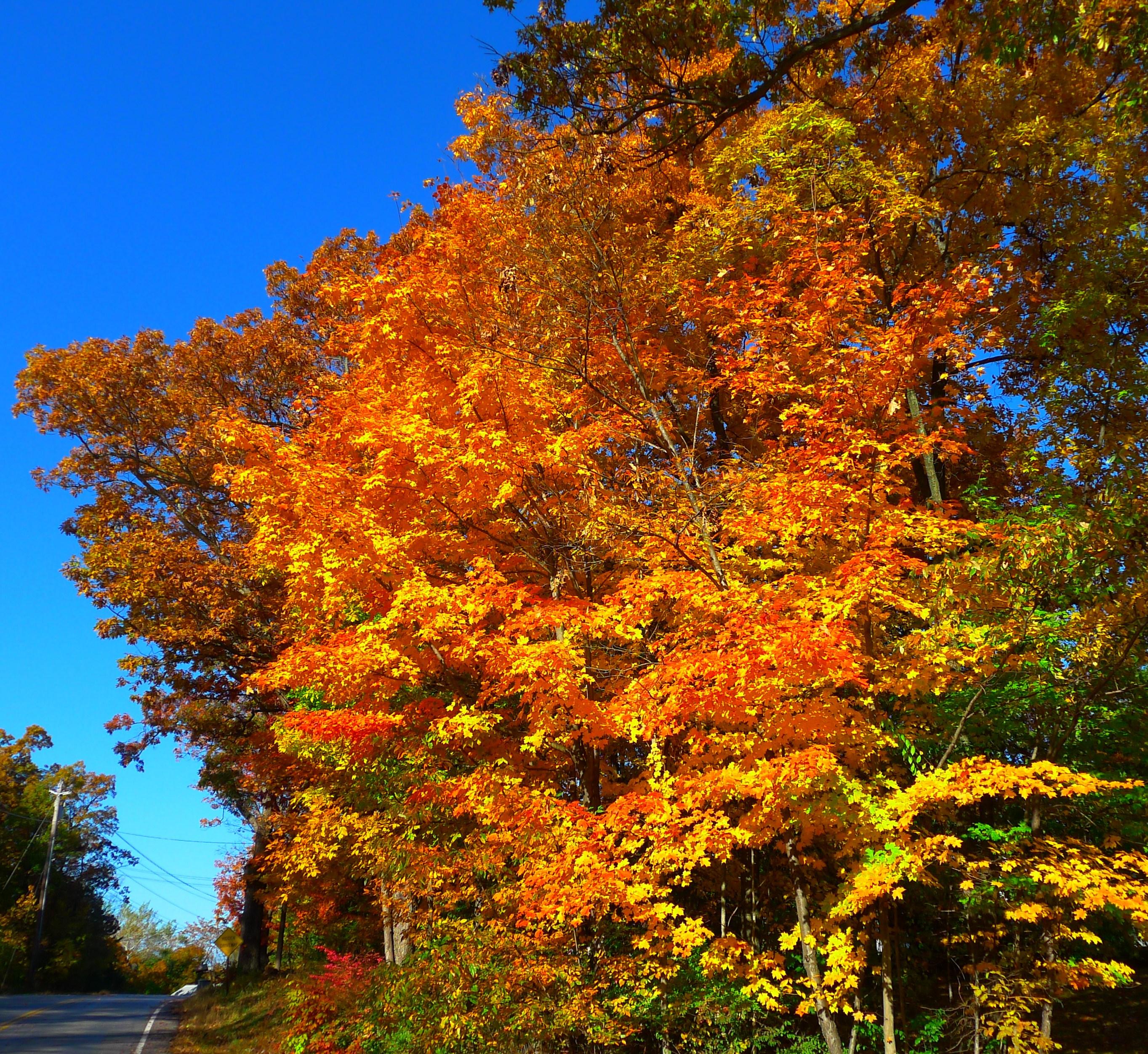 Kat's Monroe NY trees