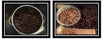 acorns 1 of 3